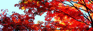 Tiperosity list fallleaves